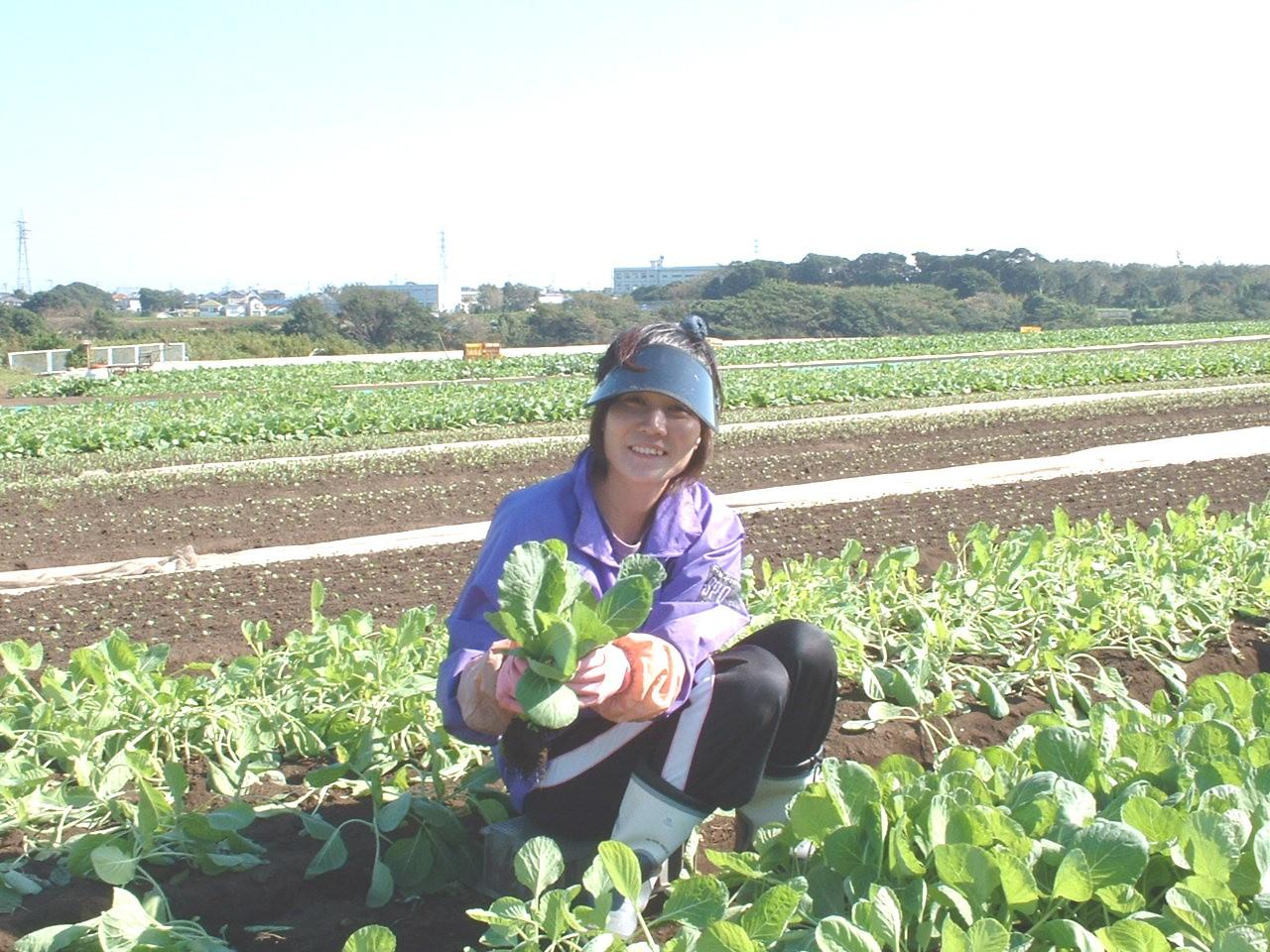農業体験アルバイト ミトミ農園では、自然の中で農業・野菜作りに関心のある方に、土とふれあう農業体